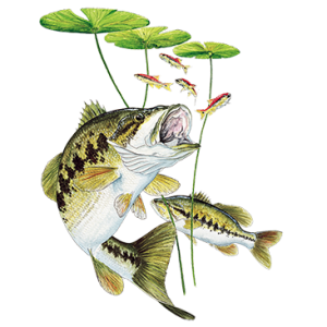 BASS UNDER LILY PAD