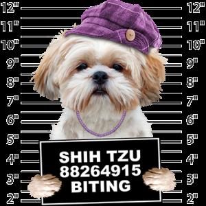 SHIH TZU BITING