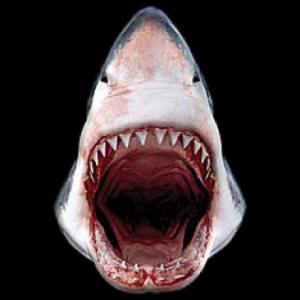 SHARK 3DT