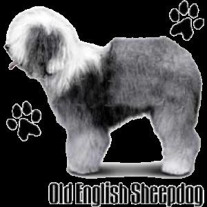 OLD ENGLISH SHEEPDOG   24