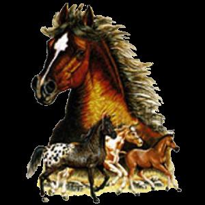 HORSES (Y)