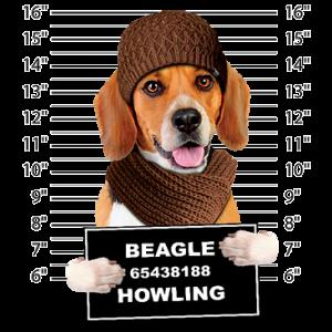 BEAGLE MUGSHOT