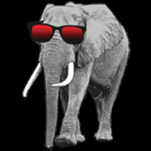 ELEPHANT WITH SUNGLASSES