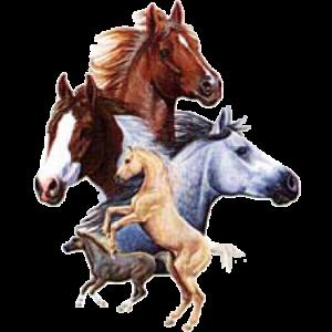 HORSE COLLAGE   (Y)  44
