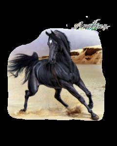 ARABIAN~HORSE   47