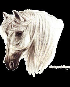 TRANKO-ANDALUSIAN HORSE  14