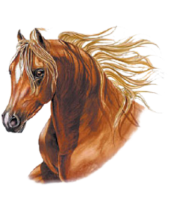 BROWN HORSE   14 (2 PCS.) SDX