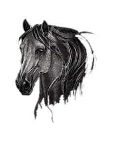HORSE HEAD      18