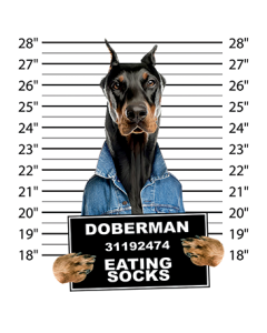 DOBERMAN MUGSHOT