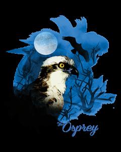 BIRDS OF PREY OSPREY NIGHT SKY